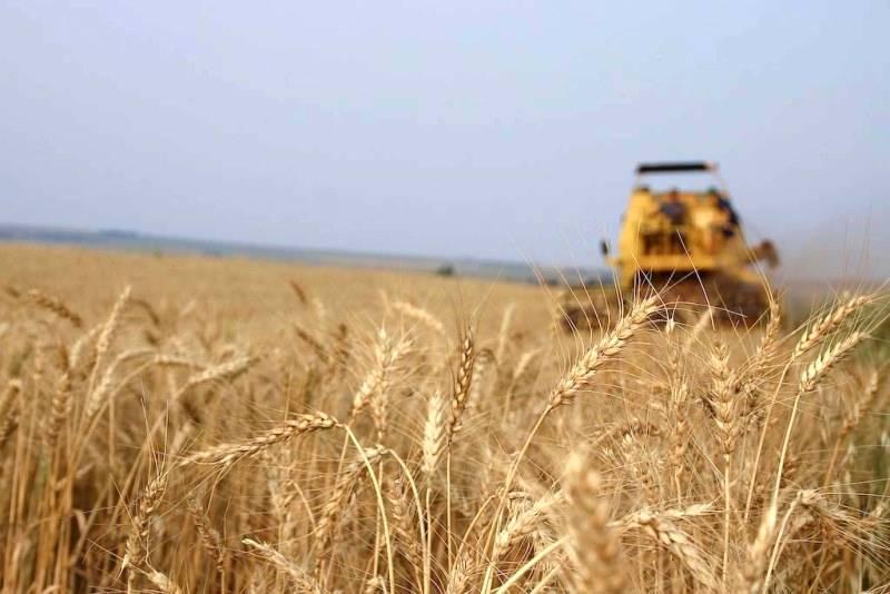 O papel do trigo na agricultura brasileira