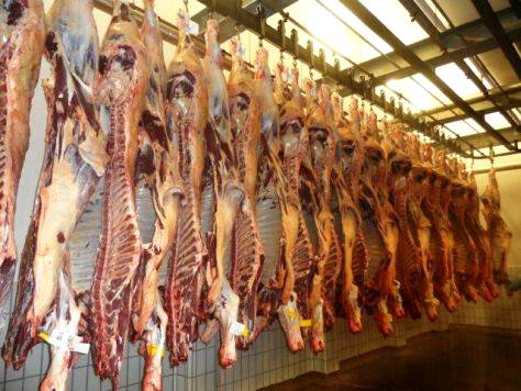 O rendimento da carcaça dos bovinos