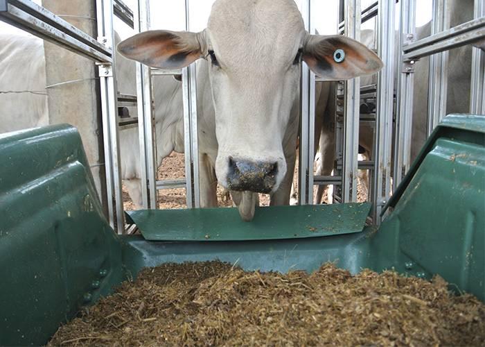 Tecnologia avalia eficiência alimentar de bovinos