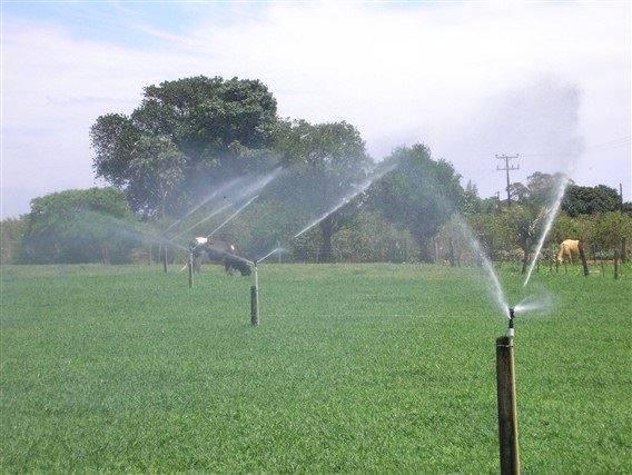 Irrigação de pastagem em períodos secos é opção de produtores bovinos