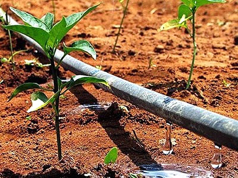 Irrigação: sistemas eficientes e manejo correto