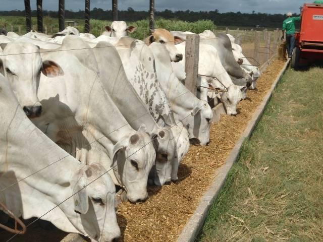 Saiba o que são os volumosos e concentrados na nutrição do rebanho bovino