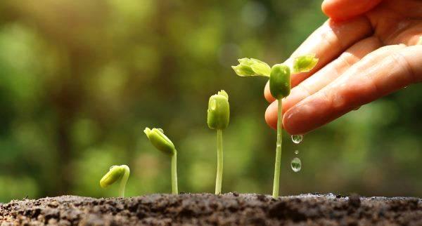 A água na medida certa: projeto de irrigação