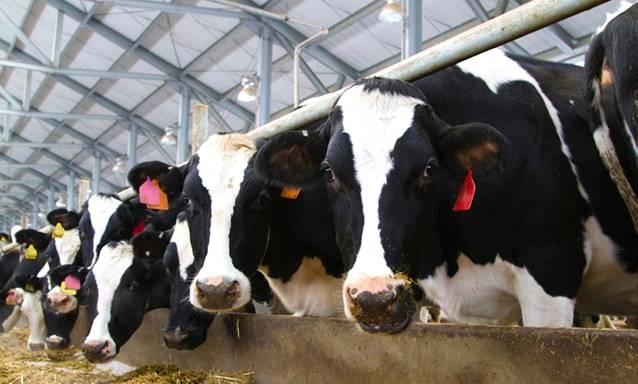 A importância da suplementação para o rebanho leiteiro
