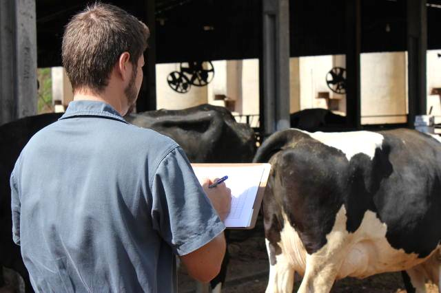 Confira 4 dicas para ampliar a produção leiteira