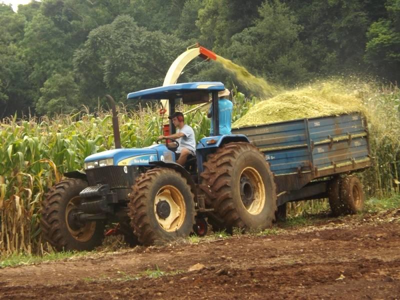 Produção de volumosos: silagem de milho com qualidade