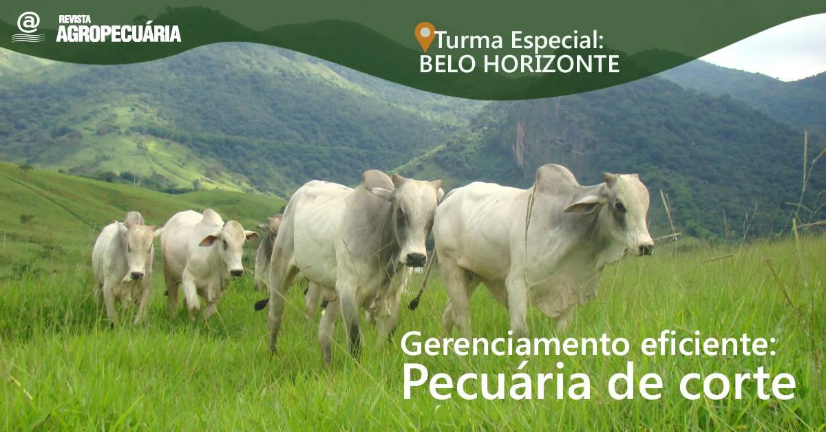 Novidades para você que atua na bovinocultura de corte