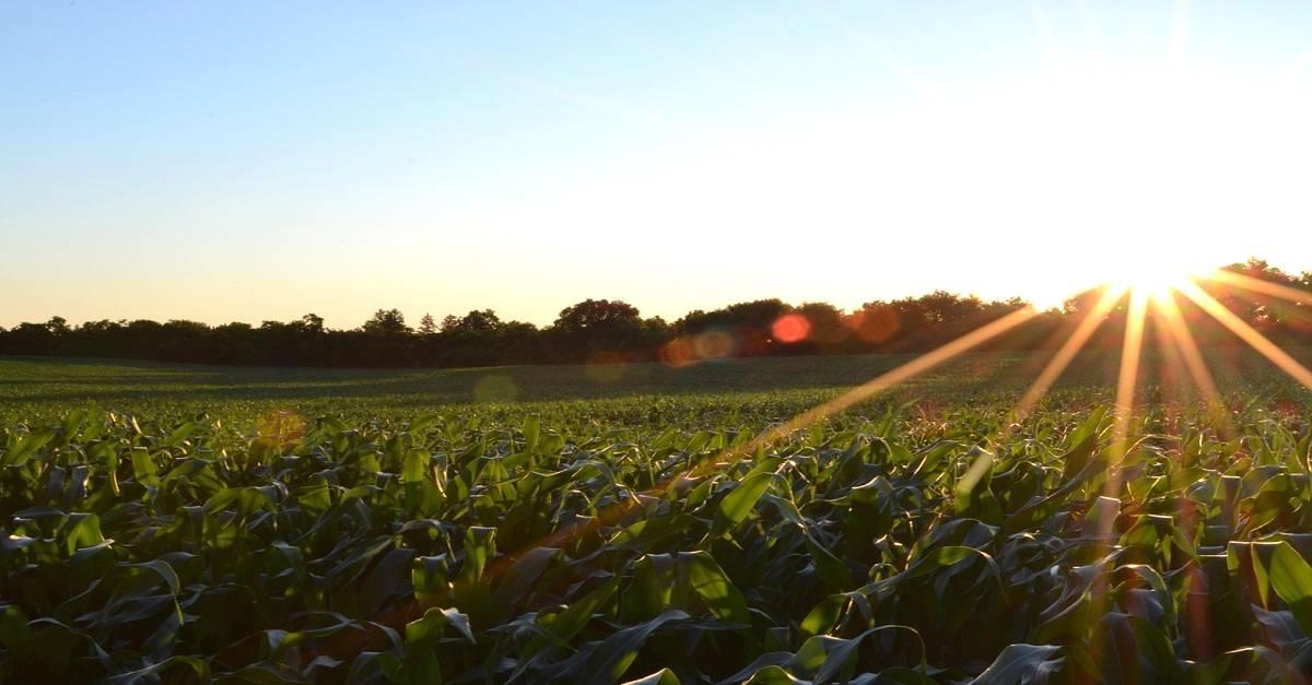 Manejo e conservação do solo: 5 dicas importantíssimas [você não pode ignorar a número #3]