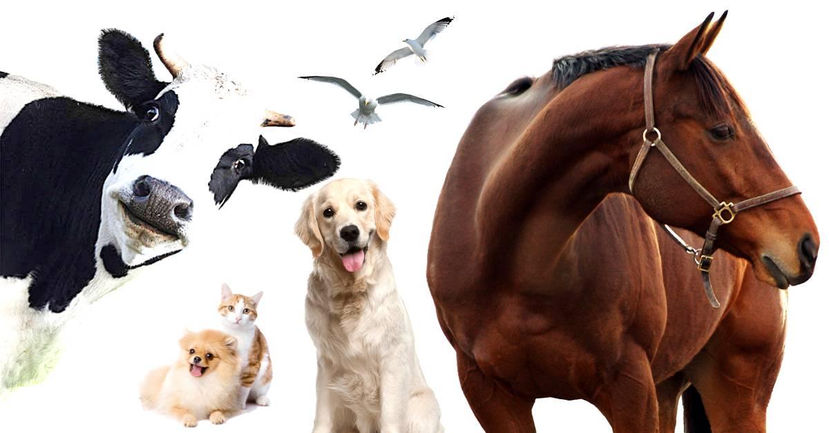 Maus-tratos aos animais: O que você sabe sobre o assunto?