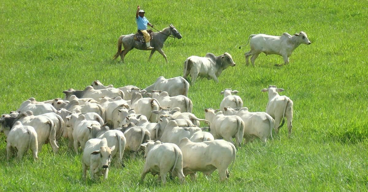 Pecuária intensiva X extensiva para gado de corte: Quais são as diferenças?