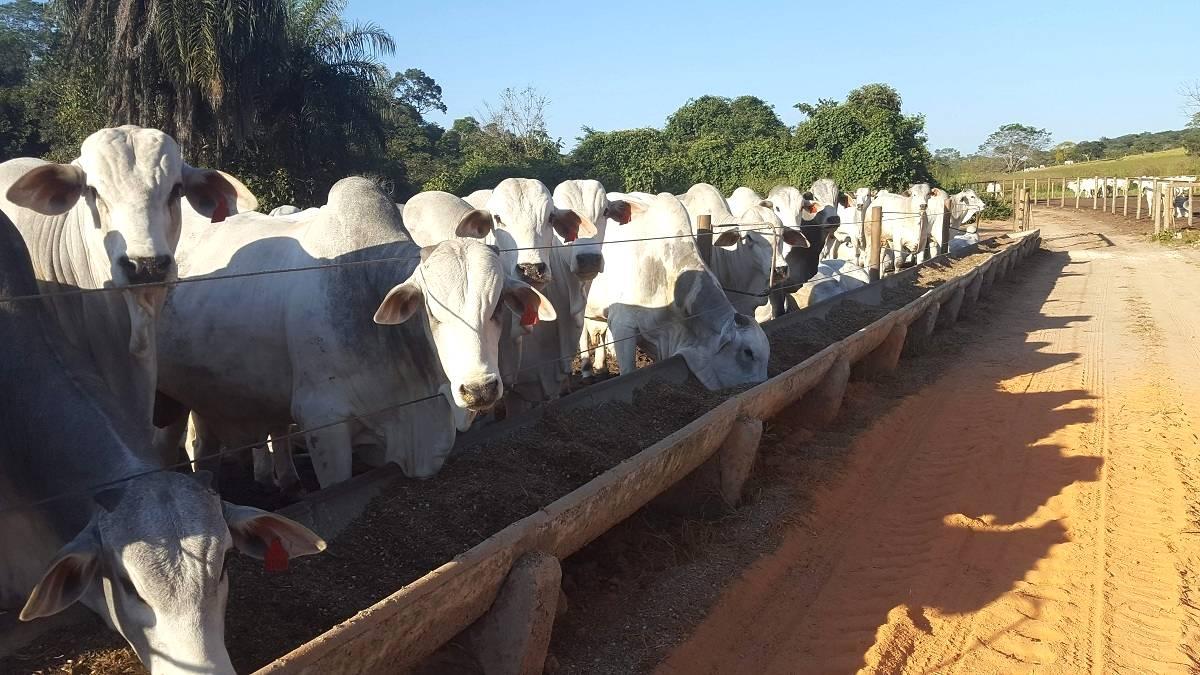 Higienização das instalações bovinas: Animais sadios e livres de doenças!