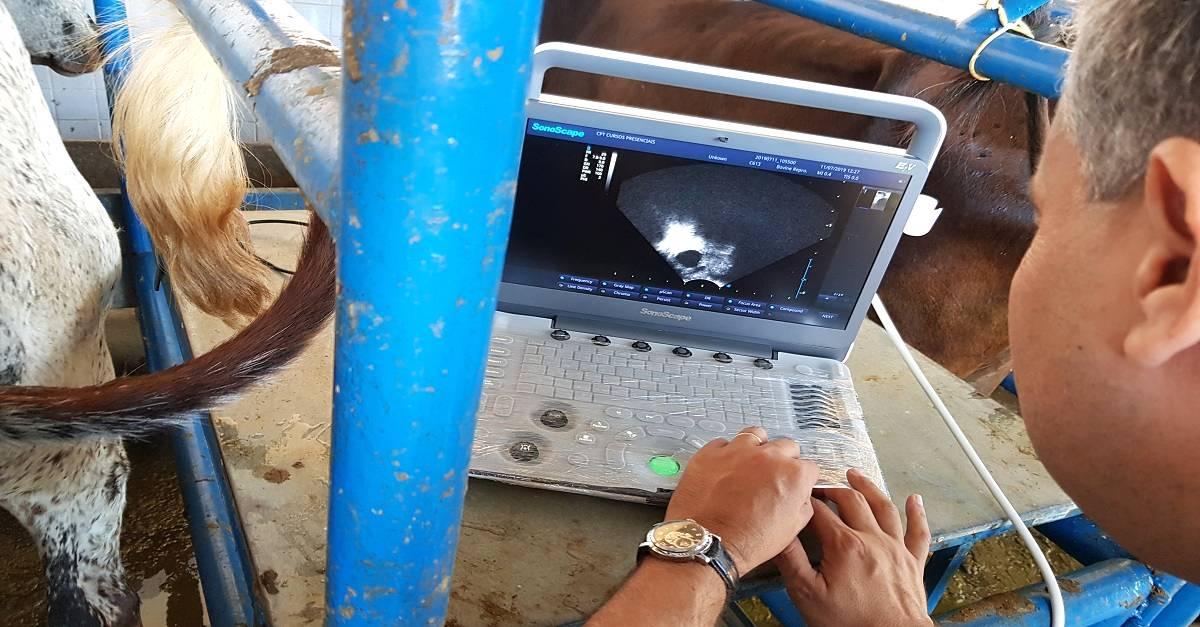 A ultrassonografia veterinária no manejo reprodutivo de gado de leite