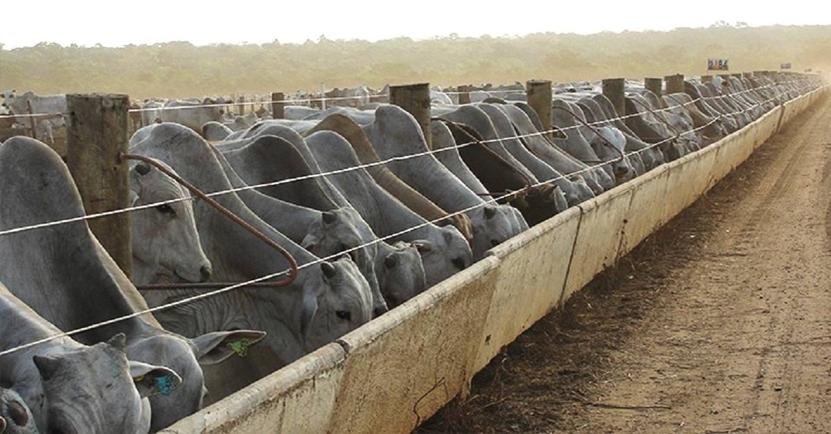Confinamento de gado de corte: O que eu preciso saber?
