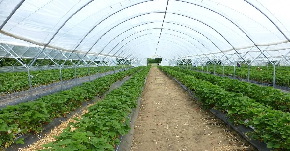 Estufas agrícolas: Quais as vantagens da sua utilização?