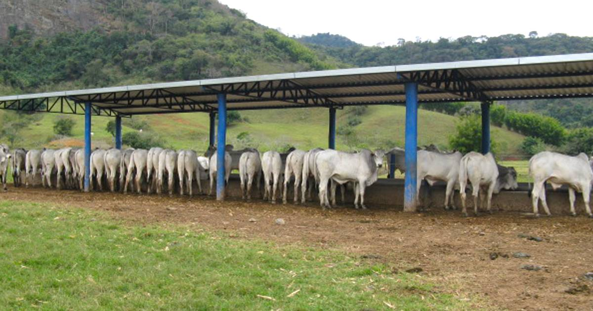 Ração para engorda de bovinos a pasto: entenda o papel desse recurso