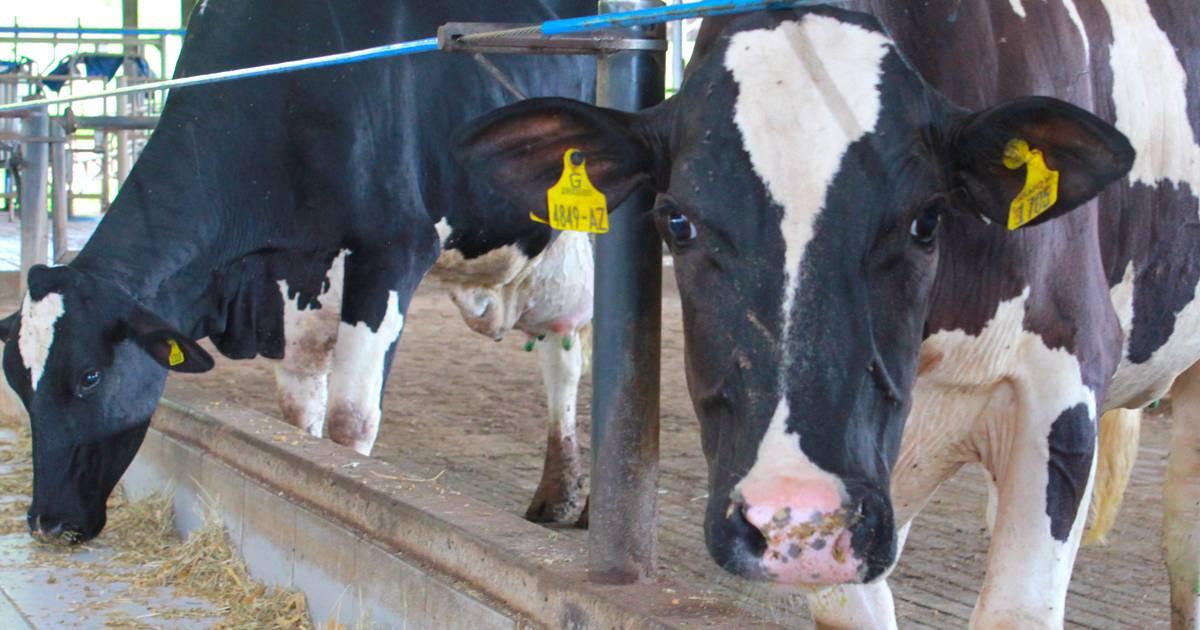 Planejamento da pecuária de leite: 6 dicas essenciais