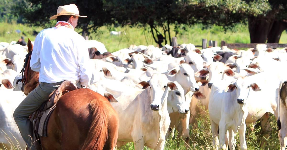 Administração de fazendas de bovinocultura de corte: conheça os pontos chave