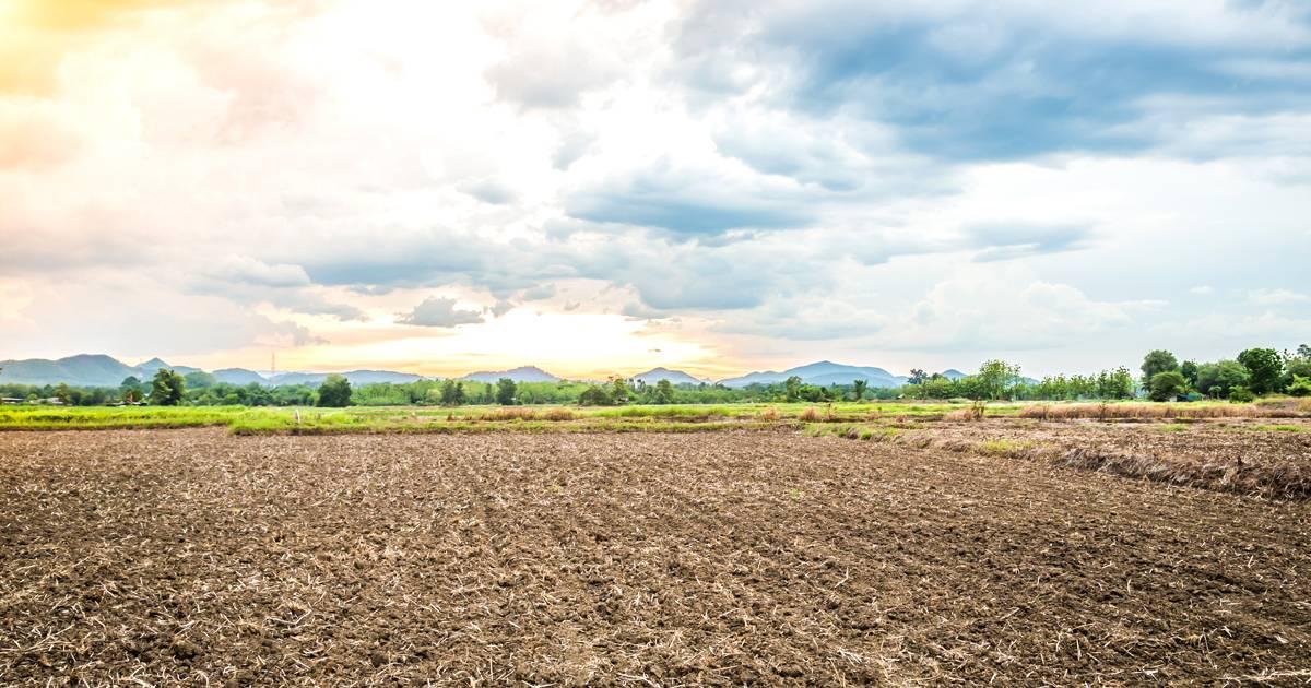 Correção de solo: importante para garantir o sucesso da sua cultura