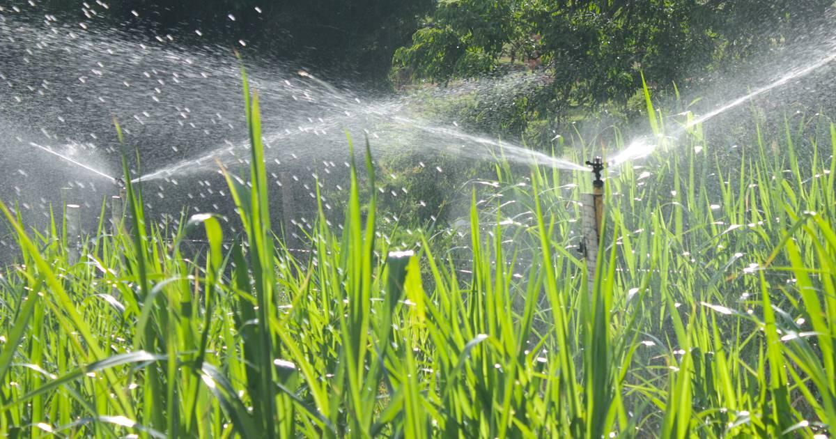 Irrigação por aspersão: conheça mais sobre o método convencional
