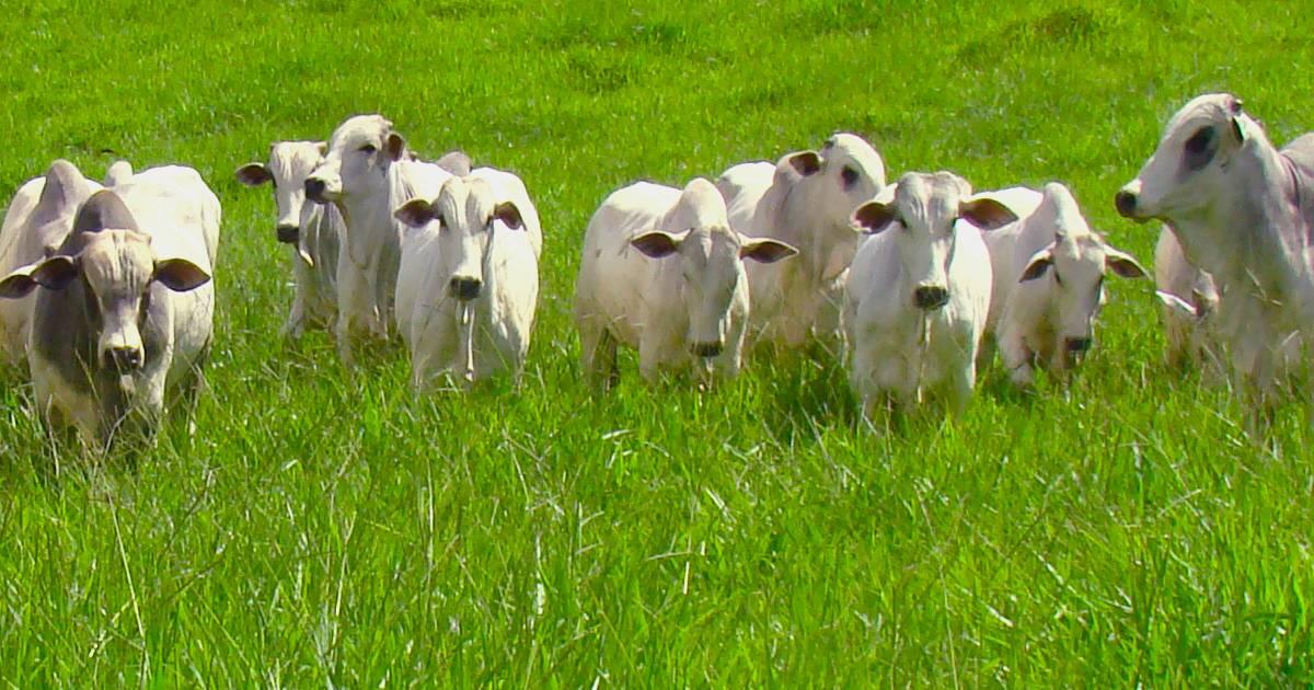 Manejo de pastagem: como garantir oferta e qualidade o ano todo!