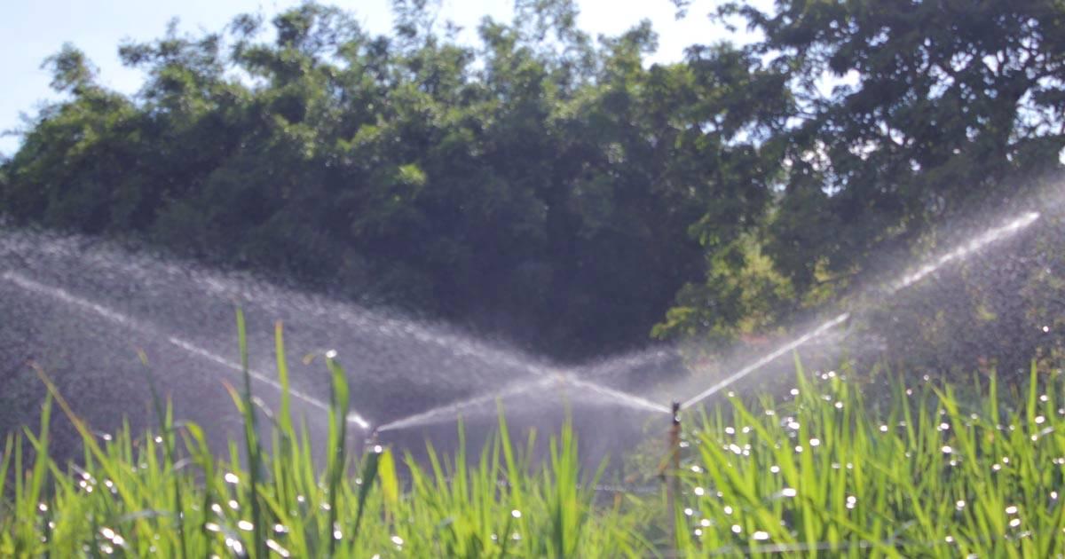 Como planejar um sistema de irrigação para sua cultura