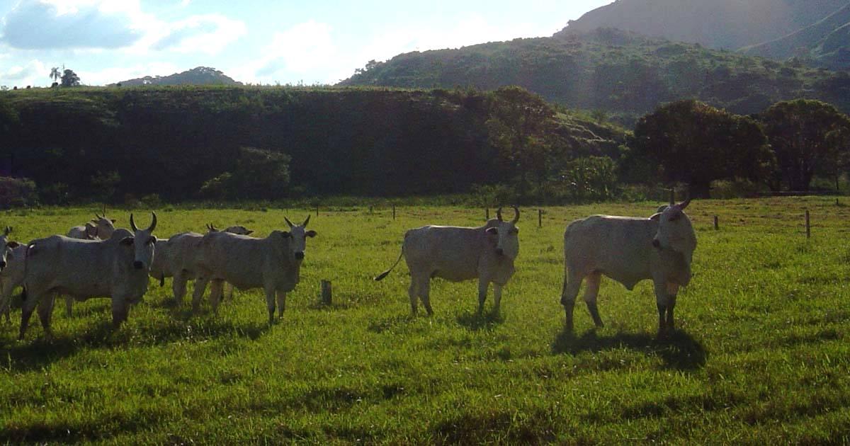 Redução da idade ao abate: por que é importante?